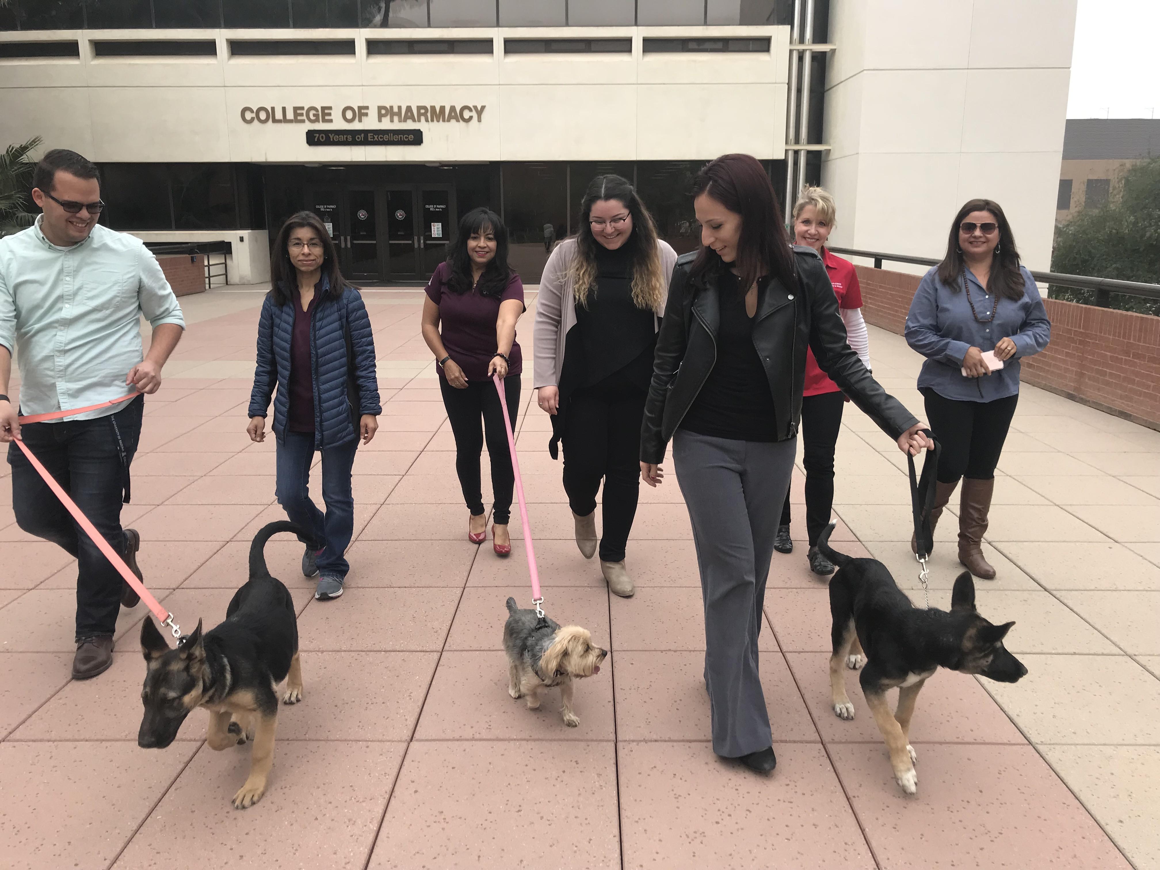 UArizona Walk Across Arizona walking dogs
