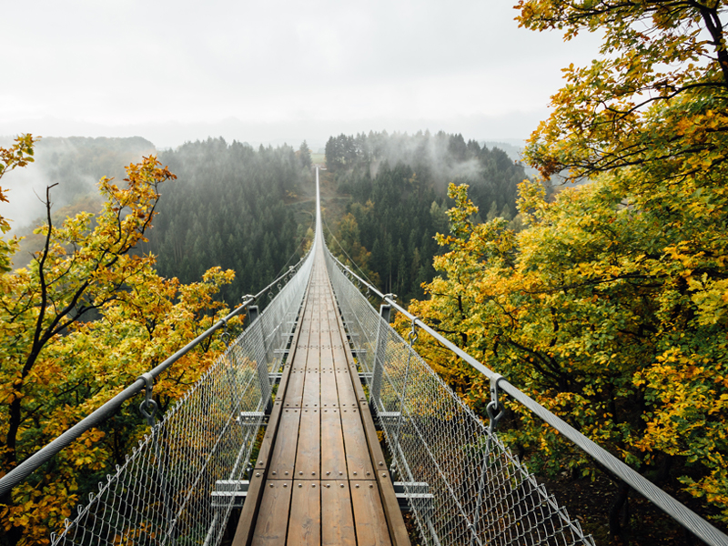 A wooden bridge over a forest